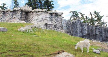 加拿大︳卡加利動物園,北美十大動物園 洛磯山脈野生動物一次滿足