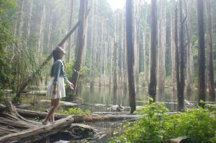 【南投。杉林溪】忘憂森林,精靈居住的人間仙境,讓人流連忘返…
