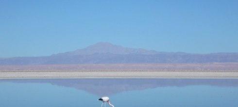 智利沙漠行程|火烈鳥的天堂,高原湖泊Lagunas Altiplanicas & Salar!沙漠冒險Day2。阿塔卡馬沙漠San Pedro De Atacama