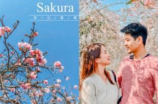 2020賞櫻景點|彰化櫻花季。芬園花卉生產休憩園區,漫步櫻花隧道