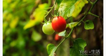 [花蓮壽豐] 江玉寶有機農場 | 無毒農業國宴食材, 有機蔬果現摘現吃〈體驗邀約〉