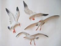 Seagull Wall Art - w Wall Decal