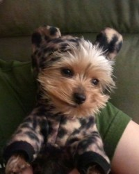 Leopard Costume for Dogs Teacup size
