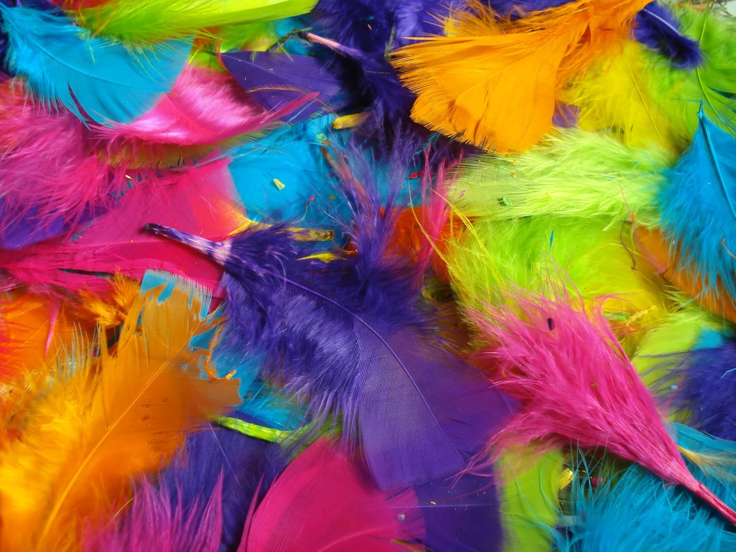 Pink Feathers Falling Wallpaper Bright Colored Feathers By Nelliesnicsnclips On Etsy
