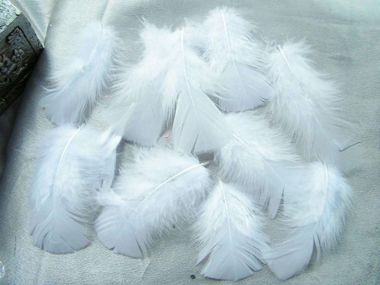 White craft feathers bulk - White Craft Feathers Bulk 8
