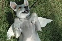 DOG COSTUME Angel Cupid Pet Halloween Costume Made to