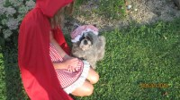 Granny/Big Bad Wolf Dog Halloween Costume Size Small or Small