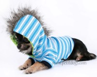 Boy Dog clothes XS Mohawk Blue Stripe Punk Dog Hoodie