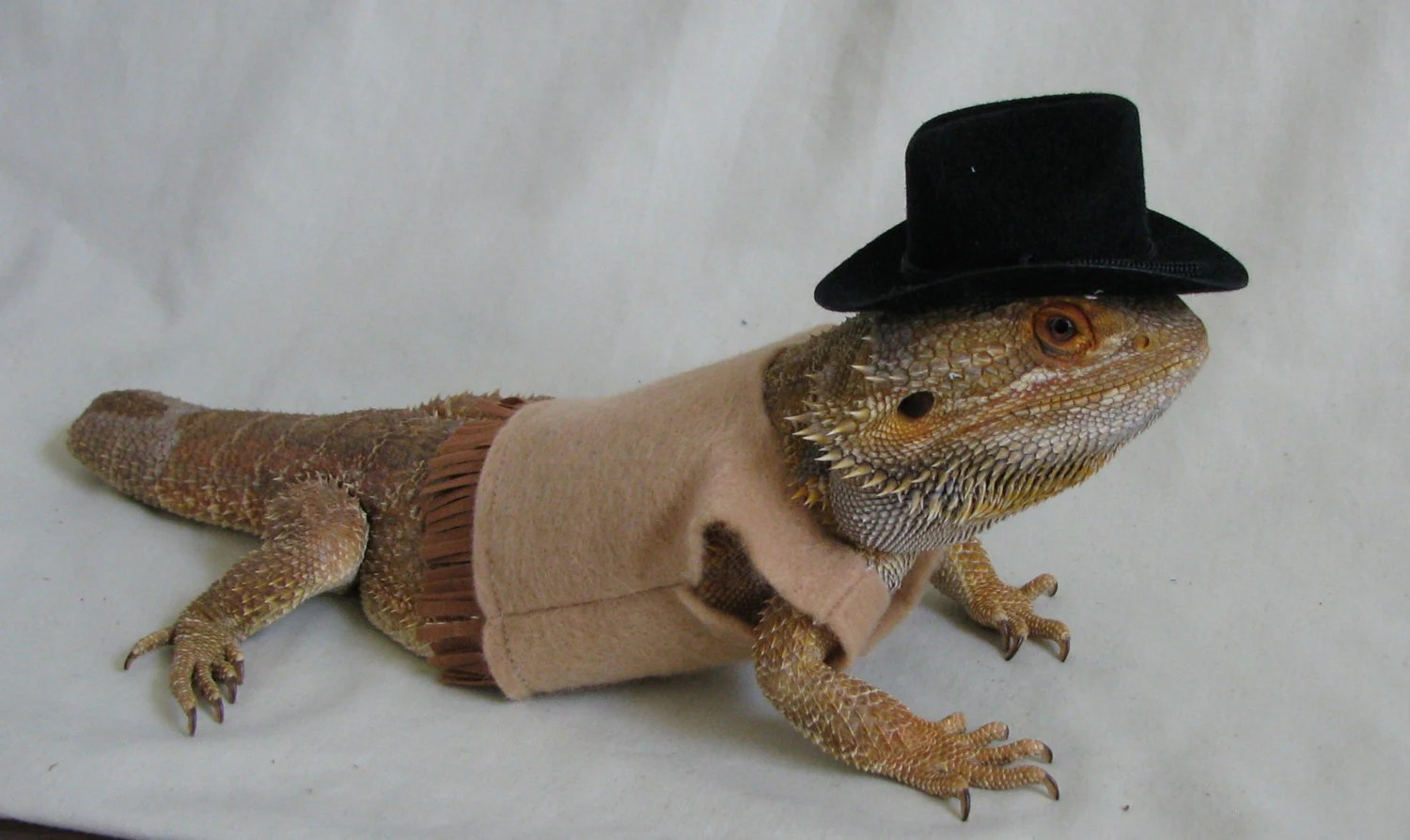 Cute Leopard Gecko Wallpaper Cowboy Sheriff Costume For Bearded Dragons Two Sizes