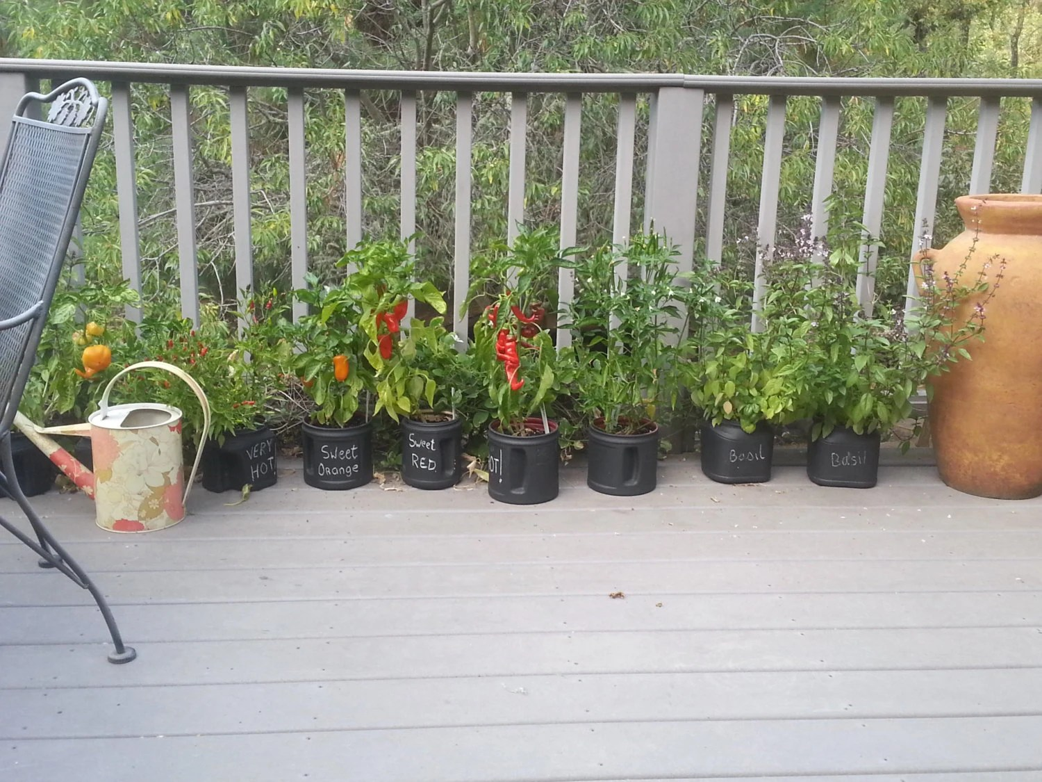Red Rooster Coffee Garden Valley Hot Rooster Chili Pepper Seeds Small Space Garden Patio