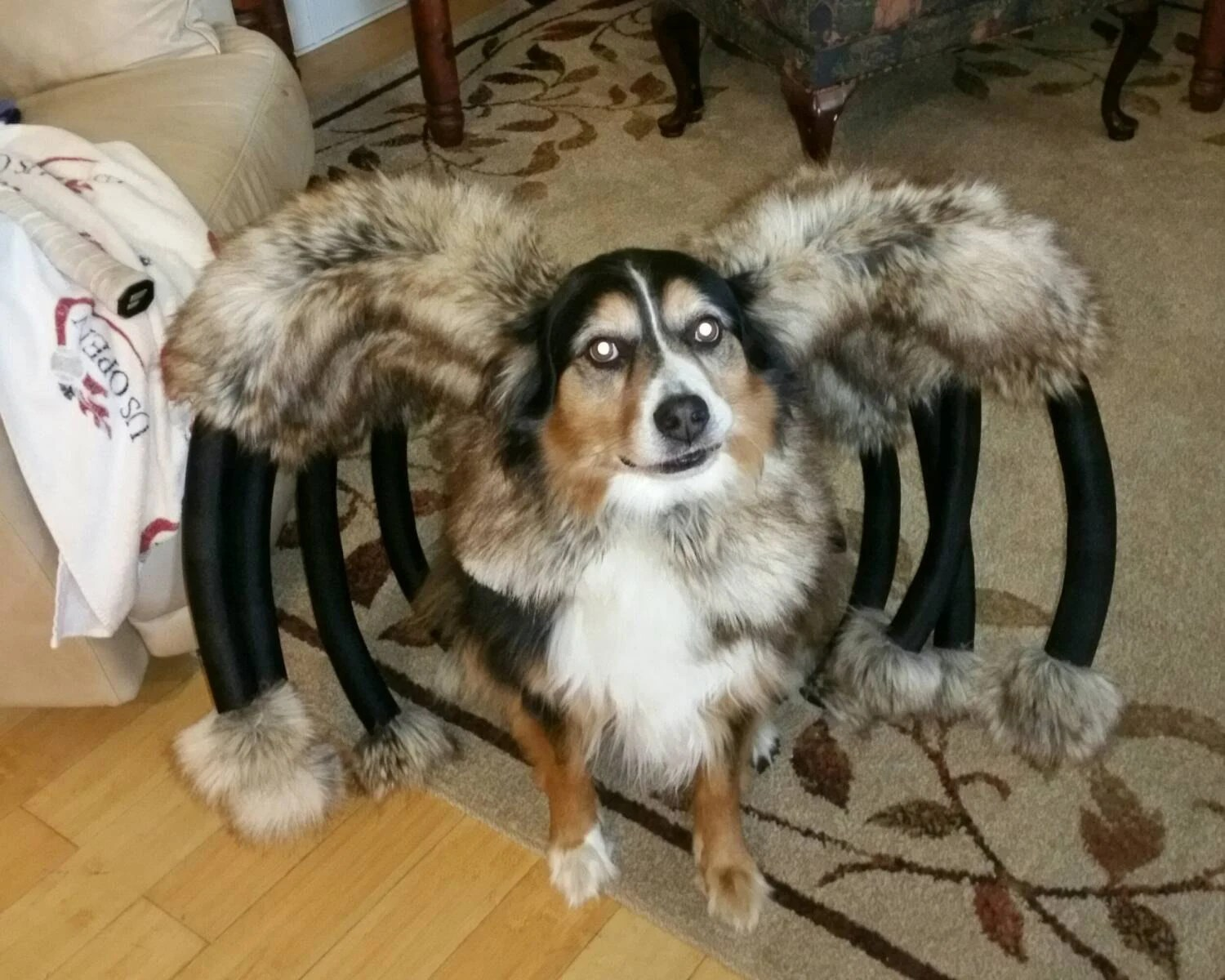 Giant Mutant Spider Dog Costume by digginitdesigns on Etsy