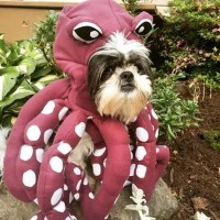 Unique One of A Kind Type Octopus Dog Halloween Costume for
