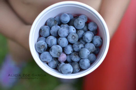 Fine Art Photography in Red, White & Blue / Blueberries / Child Holding Berries Home Decor Summer Art Print