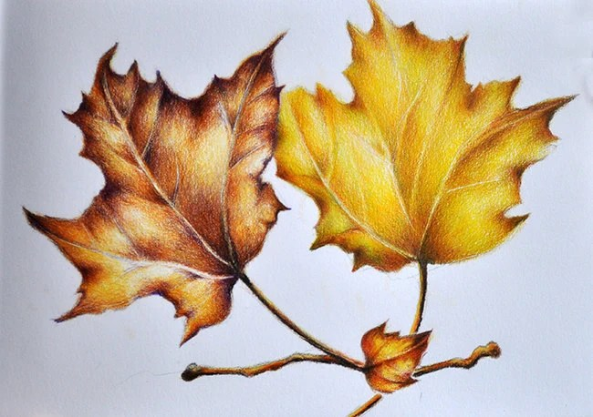 art colored colored pencil drawings pencil art colored pencils leaf
