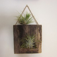 Items similar to Reclaimed Wood Air Plant Wall Holder on Etsy