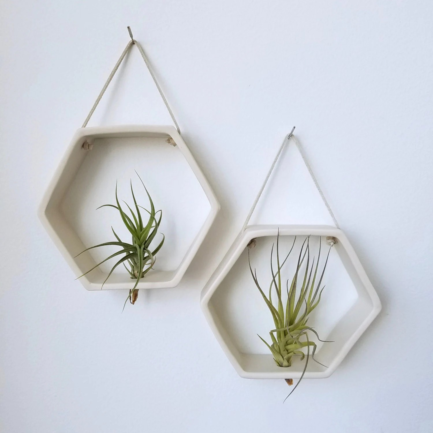 Wall Mounted Plant Holders Porcelain Honeycomb Air Plant Holder Geometric Wall Hanging