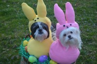 Custom Made Easter Candy dog costume for your small pet/dog