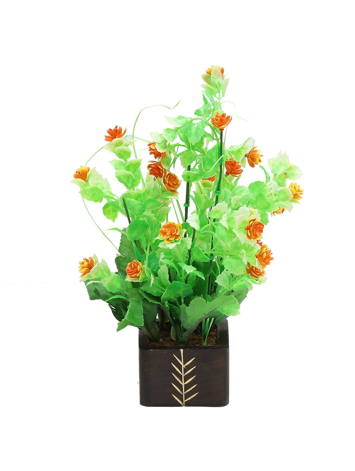 Small House Plants With Flowers Small Indoor Flowering Plants India Flowers Healthy