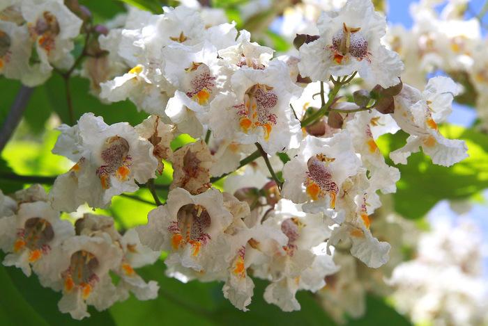 макаронное дерево картинки