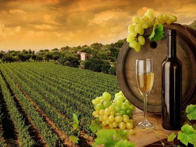 Картинка бутылка, вино, бочка, виноградник, виноград 2560x1600, фото 58023