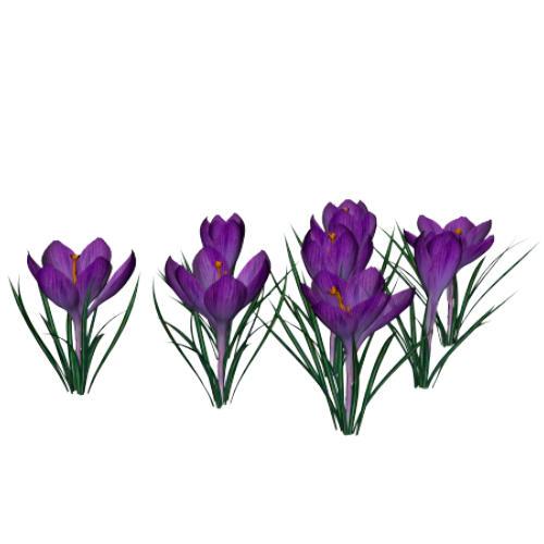 3d Flower Photo Wallpaper Purple Crocus By Texelgirl Stock On Deviantart