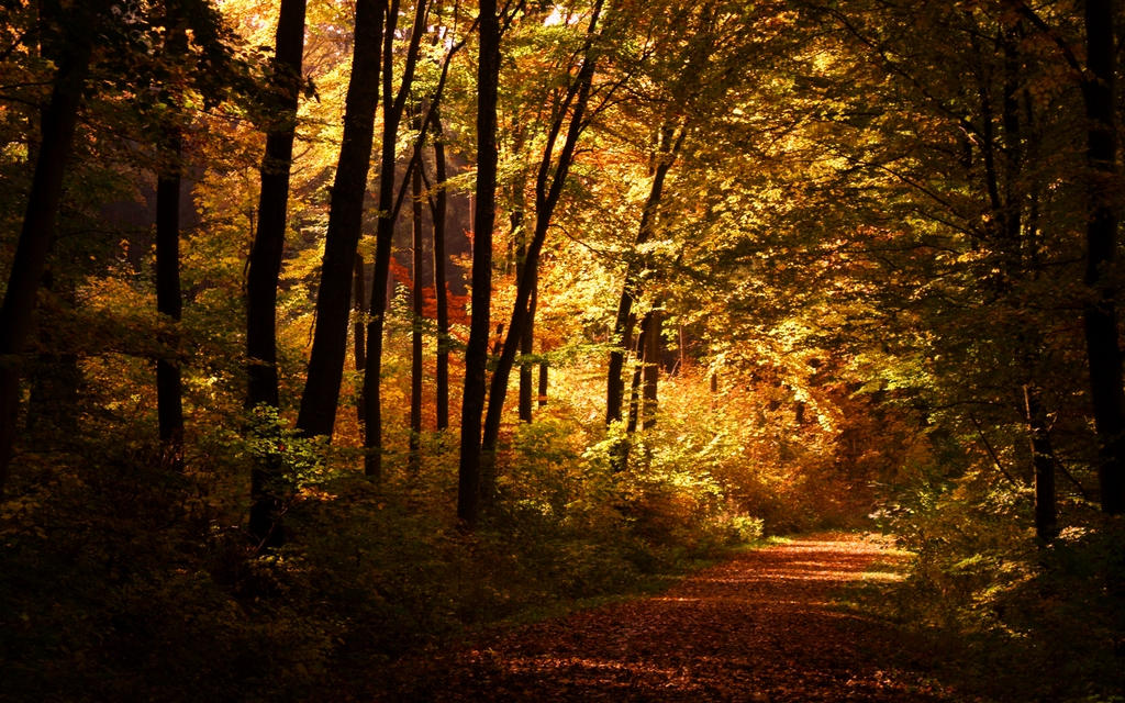 Free Desktop Wallpaper Fall Scenes Lonely Autumn Walk Wallpaper By Joinnovate On Deviantart