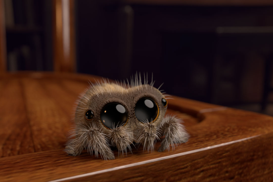Cute Wallpaper With Quotes In Hindi Meet Lucas The Cutest Spider In The World And The Perfect