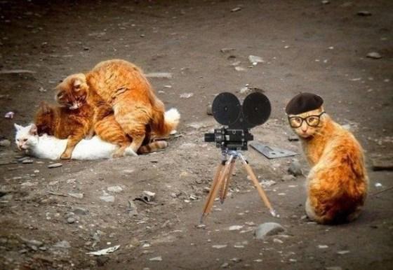 【おもしろ画像】あらゆる動物たちのいろいろな面白い画像を集めてみましたww 12