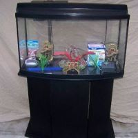 55 gallon fish tank bow front - Pet Supplies Fish & Aquariums Aquariums & Tanks