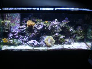 75 Gallon Oceanic Saltwater Aquarium w 30 Gallon Refugium Complete