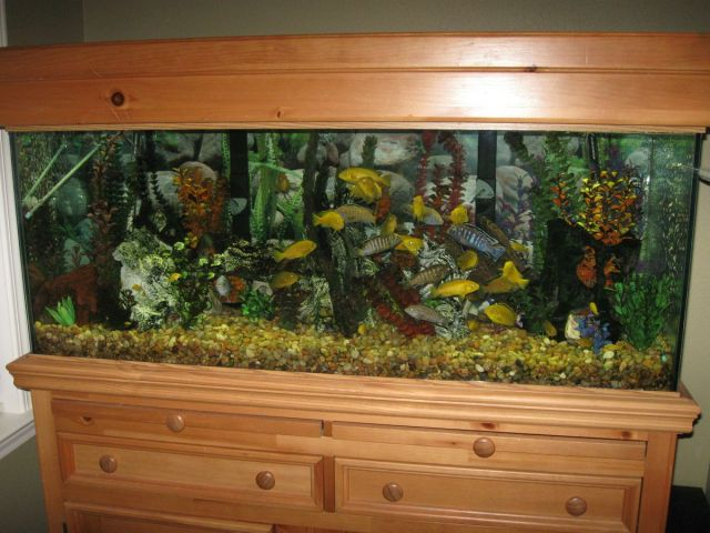 how to set up a 20 gallon tropical fish tank