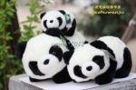 Cute Panda Stuffed Animal Plush