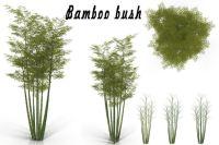 Bamboo bush 3D model | CGTrader