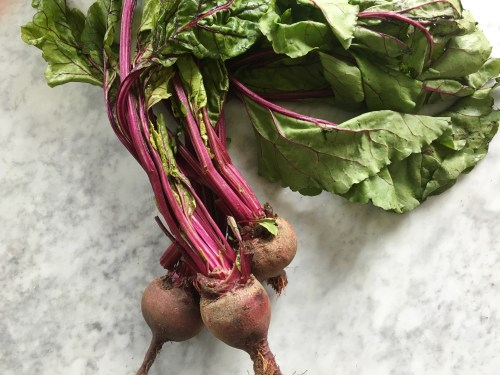 Medium Of How To Store Beets