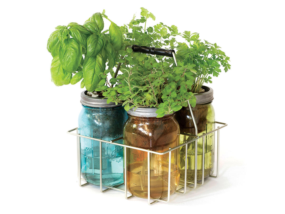 Home Herb Garden Kit 5 Things You 39ll Find In Broadcast Journalist Norah O