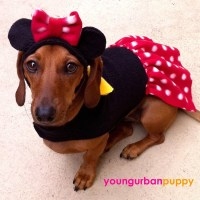 MINNIE MOUSE Disney Dress Dog Costume