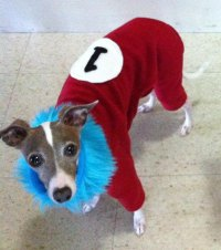 Thing 1 and Thing 2 Style Costume Dog Pajamas