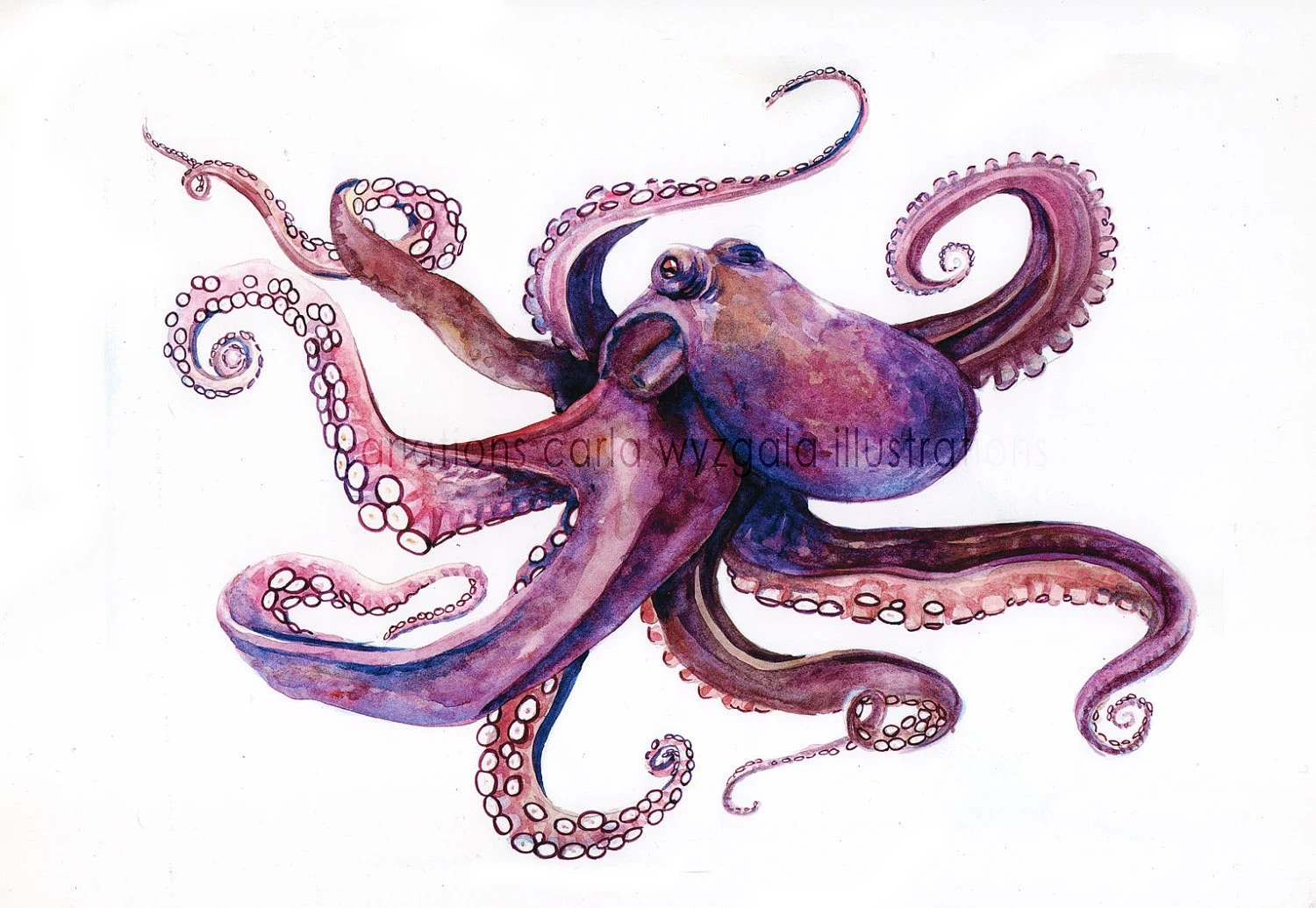 Purple Octopus Art Items Similar To Purple Octopus Watercolor Poster On Etsy
