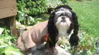Indian Dog Halloween Costume size medium