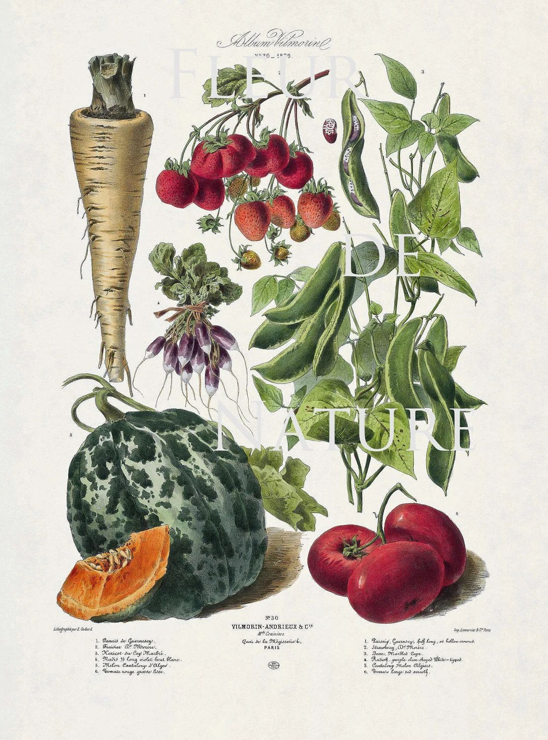 French vegetable garden 8x10 botanical art print 30 antique