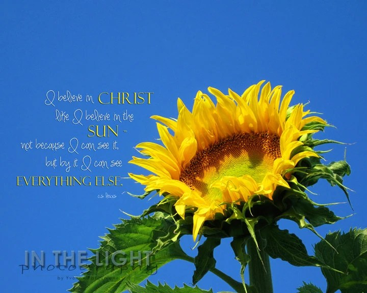 Floral Inspirational Quote Wallpaper Sunflower C S Lewis Quote Fine Art Photography Etsy