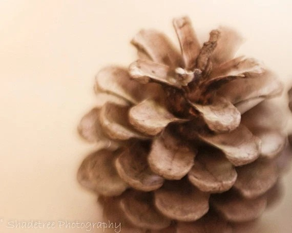 Minimalist Wallpaper Fall Autumn Fall Pincone Minimalist Simple Style Nature Photography