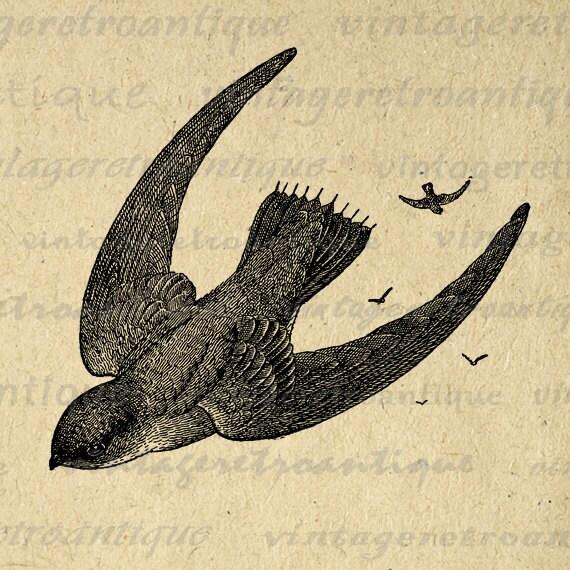 Digital Printable Flying Birds Graphic Bird Image Download Vintage