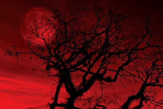 Peonies Wallpaper Iphone 6 Tree Photo Red Sky Digital Download Red Moon Bare Branches
