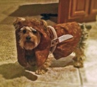 Ewok dog costume Made to order only