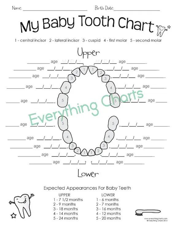 Baby Tooth Chart PDF/Printable