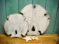 Sand Dollar Wall Art - 1000+ images about sand dollar ...