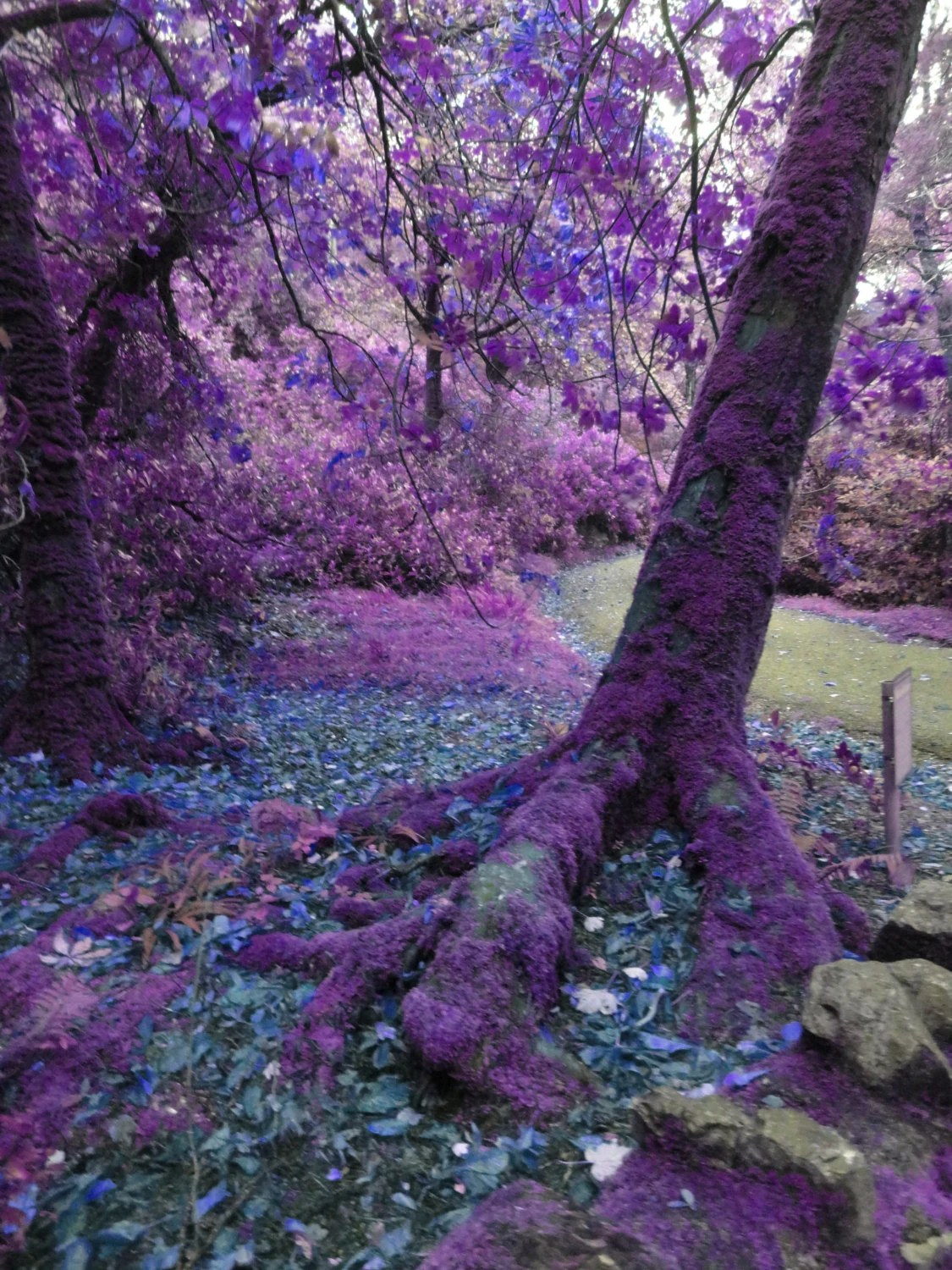 Hd Wallpaper Fall Leaf Change Mysterious Trees Photography 8 X 10 Purple Fairy Trees