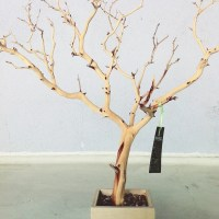 Diy Jewelry Holder Tree | www.imgkid.com - The Image Kid ...