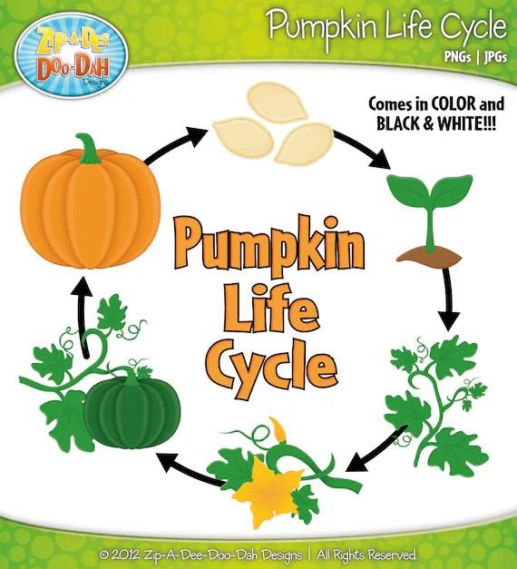 Lifecycle Of A Pumpkin - Lessons - Tes Teach